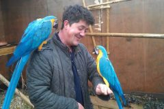 CCTV footage catches macaw thieves' struggle in Kent aviary