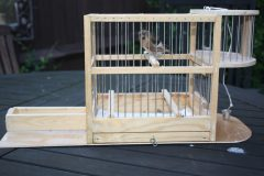 Custom-built redpoll cage