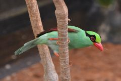Two-year campaign launches to save songbirds from extinction