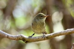 Unrelated offspring care could be birds' investment strategy