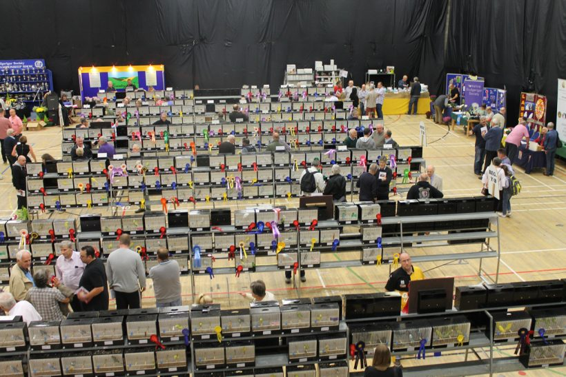 Two assessments of the Budgerigar Society Club Show
