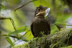 Song identifies 21 possible new Neotropical species