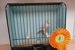 Colour canary breeders top their gold-medal count at Gouden Ring