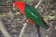 Parrots stolen while owner holidays abroad