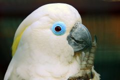 Critical action needed for endemic island species and Australian parrot
