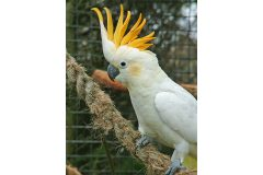 First phase of new aviaries completed for at-risk cockatoos
