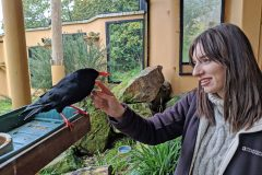 Young bird breeders encouraged to apply for Jersey course