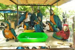 Illegally caught parrots rescued in South American raid