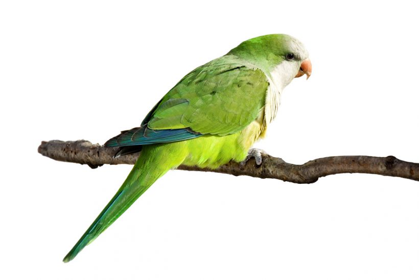 Northern Parrots Competition