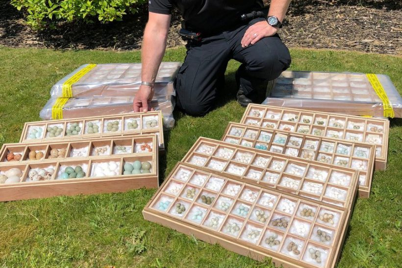Biggest haul of birds' eggs in 10 years seized in Norfolk