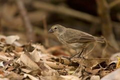 Poisoned nests save rare birds from deadly parasites