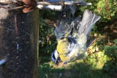 Laced feeders on public view kill wild birds at a Sussex reserve