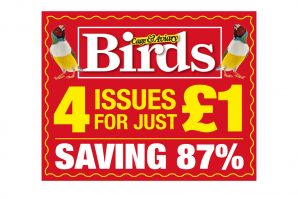 4 issues for Just £1!
