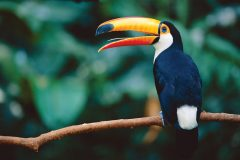 Report reveals good and bad news for Amazonian birds
