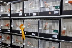Quality over quantity for coloured canary winners at Gouden Ring