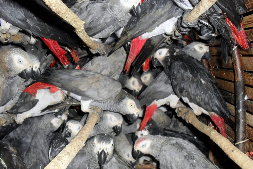 Turkish Airlines agrees to stop transporting birds from Congo