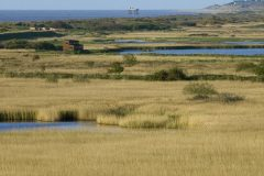 Love Minsmere plea from RSPB to EDF Energy