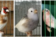 Three men arrested after Kent bird thefts