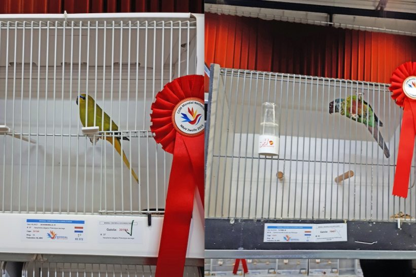 Exhibiting birds on the Continent: APHA latest – download a copy of the registration form here