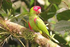 Confiscated parakeets find new home in the Ecuadorian forest