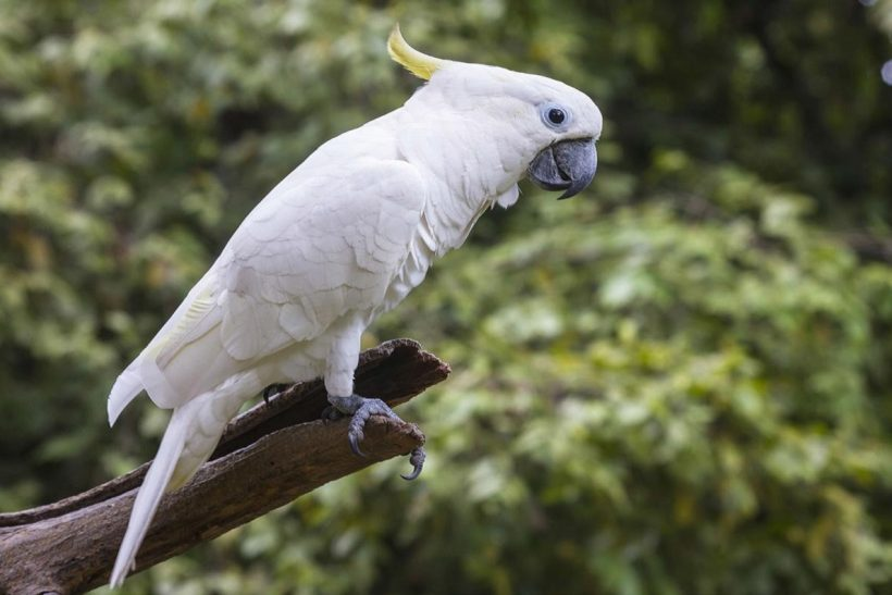 Targeted research opens the door for assisted reproduction in parrots
