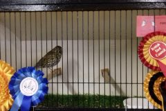Show-winning softbills stolen in Bank Holiday aviary theft