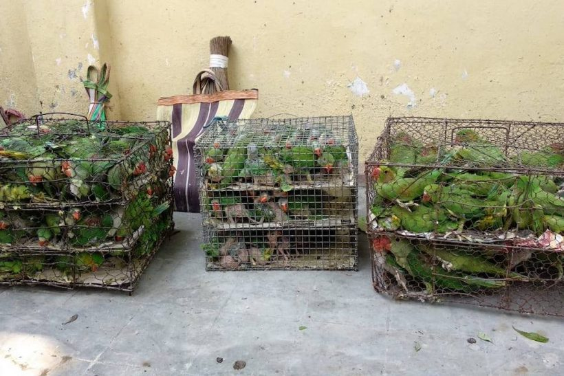 Hundreds of wild-caught birds seized