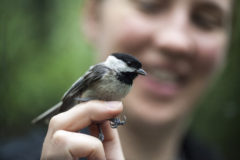 Study: 'The right smell helps birds gel'