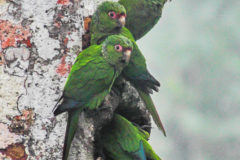 Rare species benefit from drop in illegal trade – but for how long?