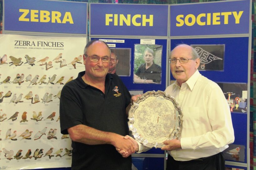 Shining example to zebra finch fancy wins Allen Silver award