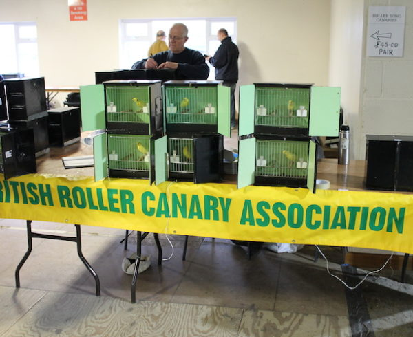'Make or break situation': roller contestants urged to step it up