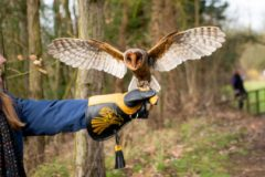 'One-in-100,000' black barn owl meets Team C&AB