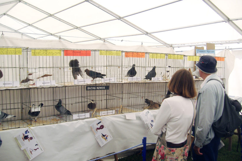 Going for free: Thame Show pens, trestles and boarding