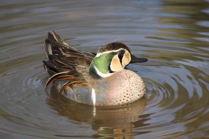 Waterfowl aviary gets the green light